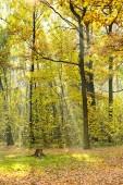 Prato di foresta illuminata dalla luce del sole — Foto Stock