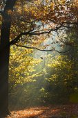Sun light lit glade in autumn forest — Stock Photo
