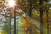 Sun light through leafage in autumn — Stock Photo