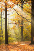 Sun rays lit glade in autumn forest — Stock Photo