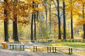 Garden benches in yellow forest in autumn — Stock Photo