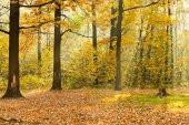 Forest glade illuminated by sunbeams in — Stock Photo