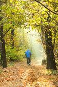 Sunlight lit path in autumn forest — Stock Photo
