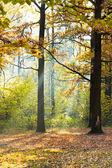 Sunbeam lit glade in autumn forest — Stock Photo