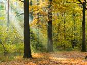 Sunbeam lit lawn in autumn forest — Stock Photo