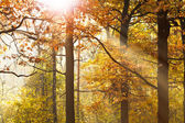 Sun beams through leafage in autumn — Stock Photo