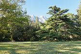 Lawn in Alupka (Vorontsov) garden in autumn — Stock Photo