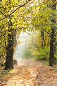 Sunlight lit footpath in autumn forest — Stock Photo