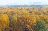 Autumn forest and urban houses on horizon — Foto de Stock