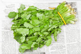 Fresh coriander leaves in bunch on newspaper — Stock Photo