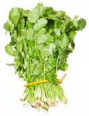 Fresh coriander leaves in bunch isolated — Stock Photo