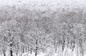 Above view of snowbound forest in winter — Stock Photo
