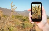 Tourist taking photo of cactus in Mojave Desert — Stock Photo