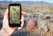 Tourist shooting photo of cactus in Mojave Desert — Stock Photo
