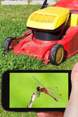 Tourist photographs of red dragonfly — Stock Photo