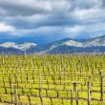 Empty vineyard in Etna winemaking region in spring — Stock Photo #70981623