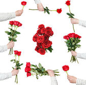 Set of red rose bunches of flowers isolated — Stock Photo