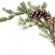 Twig of fir tree with cone on white — Stock Photo #78073516