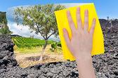 Hand deletes lava on Etna volcano by yellow cloth — Stock Photo