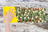 Hand deletes old snow by yellow cloth — Stock Photo