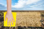 Country landscape with field od ripe wheat — Stock Photo