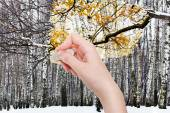 Hand deletes winter forest by rubber eraser — Stock Photo