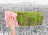 Hand deletes winter forest by pink cloth — Stock Photo