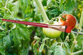 Paintbrush and painted red ripe tomato — Stock Photo