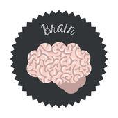 Hersenen ontwerp — Stockvector