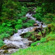 Small waterfall in forest — Stock Photo #78069374