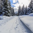 Winter landscape, snow-covered trees in swiss Alps — Stock Photo #68561447