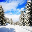 Winter landscape, snow-covered trees in Swiss Alps — Stock Photo #68561605