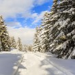 Winter landscape, snow-covered trees in Swiss Alps — Stock Photo #68562621