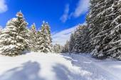 Winter landscape, snow-covered trees in Swiss Alps — Stock Photo