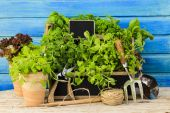 Herbs and garden tools — Stock Photo