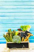 Fresh green vegetables harvested in the garden — Stock Photo