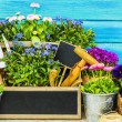 Garden tools, flowers on a wooden background — Stock Photo #71569667