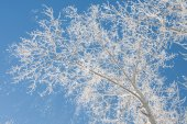 Winter boom — Stockfoto