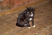 Cat at Nga Phe Chaung Monastery Myanmar — 图库照片