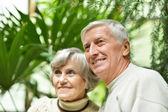 Senior couple in summer park — Stock Photo