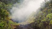 Steam Rising From Vent in Jungle at Hawaii Volcanoes National Pa — Stock Photo