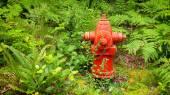 Red Fire Hydrant in Lush Forest of Green Ferns — Stock Photo