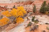Photographing Zion National Park Autumn — Stock Photo