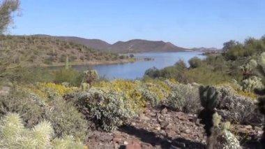 Arizona Desert in Spring — Stock Video