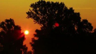 Sun and trees.Sunrise NTSC  Timelapse — Vídeo de Stock
