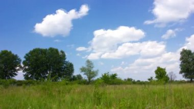Summer  landscape with sky. Without birds — Wideo stockowe