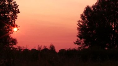 Sunset in  wood in red tones. Time lapse — Vídeo de Stock