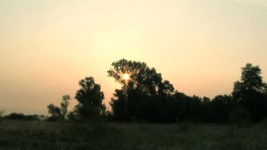 Sunrise in the wood. Time lapse — Vídeo de Stock