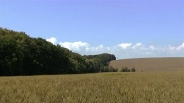 Wheat field and sky. PAL Time lapse — Stock Video