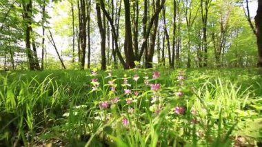 Forest glade with flowers. Slow motion. Stabilized  video. — Stock Video